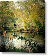 Cow By The Pond Metal Print