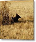 Cow Elk Metal Print by Johanna Elik