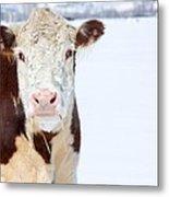 Cow - Fine Art Photography Print Metal Print