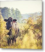 Cow Hiding In The Weeds Metal Print