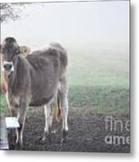 Cow In The Fog Metal Print