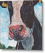 Cow No 05. 0556 Irish Friesian Cow Metal Print