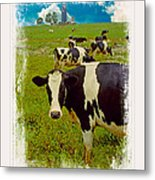 Cow On Farm Version - 3 Metal Print