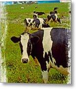 Cow On Farm Version - 4 Metal Print