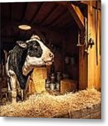 Cow On The Farm Metal Print
