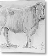Cow Pencil Drawing Metal Print