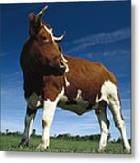 Cow Standing In Field Germany Metal Print