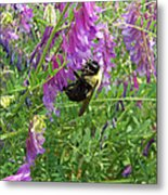 Cow Vetch Wildflowers And Bumble Bee Metal Print