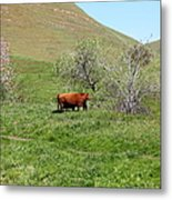Cows Along The Rolling Hills Landscape Of The Black Diamond Mines In Antioch California 5d22303 Metal Print by Wingsdomain Art and Photography