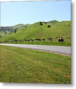 Cows Along The Rolling Hills Landscape Of The Black Diamond Mines In Antioch California 5d22326 Metal Print by Wingsdomain Art and Photography