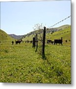 Cows Along The Rolling Hills Landscape Of The Black Diamond Mines In Antioch California 5d22339 Metal Print by Wingsdomain Art and Photography