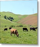 Cows Along The Rolling Hills Landscape Of The Black Diamond Mines In Antioch California 5d22355 Metal Print by Wingsdomain Art and Photography