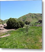 Cows Along The Rolling Landscapes Of The Black Diamond Mines In Antioch California 5d22291 Metal Print by Wingsdomain Art and Photography