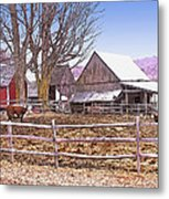 Cows At Jenne Farm Metal Print