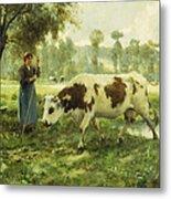 Cows At Pasture  Metal Print