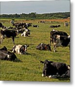 Cows At Work 1 Metal Print