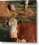 Cows At Work 2 Metal Print