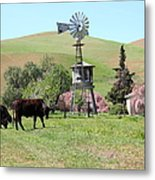 Cows Home On The Ranch At The Black Diamond Mines In Antioch California 5d22345 Metal Print by Wingsdomain Art and Photography