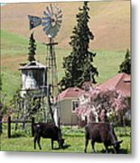 Cows Home On The Ranch At The Black Diamond Mines In Antioch California 5d22354 Metal Print by Wingsdomain Art and Photography
