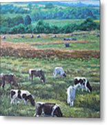 Cows In A Field In The Devon Countryside Metal Print