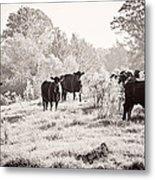Cows Metal Print by Karen Broemmelsick