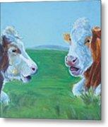 Cows Lying Down Chatting Metal Print