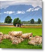 Cows On The Green Field Metal Print