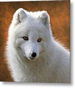 Coy Arctic Fox Metal Print