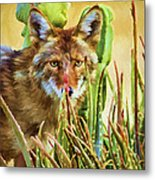 Coyote In The Aloe Metal Print