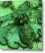Cozumel Octopus Metal Print