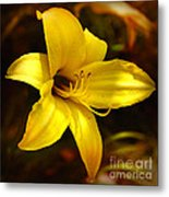 Cozy Yellow Daylily Metal Print