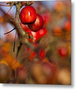 Crab Apple Bright Metal Print