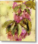 Crab Apple Metal Print by Jill Balsam