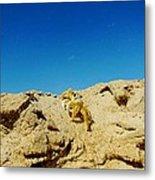 Crab Climb Blowing Sand 8/24 Metal Print