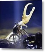Crab Star Metal Print