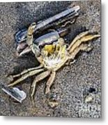 Crab With A Feather Metal Print