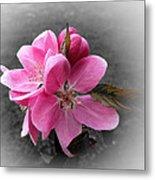 Crabapple Flower Metal Print