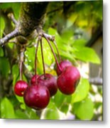 Crabapple Hill Metal Print