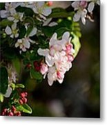 Crabapple Intricacies Metal Print