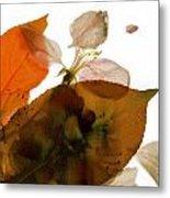 Crabapple Rose I Metal Print