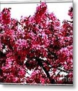 Crabapple Tree Blossoms Metal Print