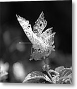 Cracked Wing Metal Print