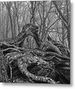 Craggy Roots Metal Print