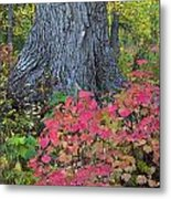 Cranberry Bush And Cottonwood Tree Metal Print