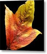 Cranberry Tree Leaf Isolated On White Metal Print