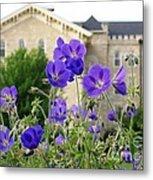 Cranesbill Blue Geranium Metal Print