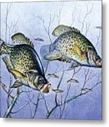 Crappie Brush Pile Metal Print by JQ Licensing