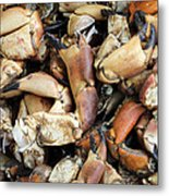 Crayfish Metal Print