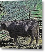 Crazy Cow Metal Print