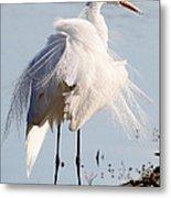 Crazy Egret Feathers Metal Print